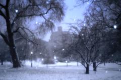 Central Park - Snow Magic (6-7) (LizBallerPhotos) Tags: nyc winter bw snow color centralpark hudsonriver blizzard lizballer