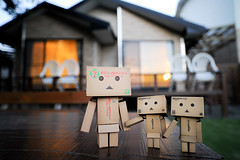 (Louis Liu) Tags:   danbo
