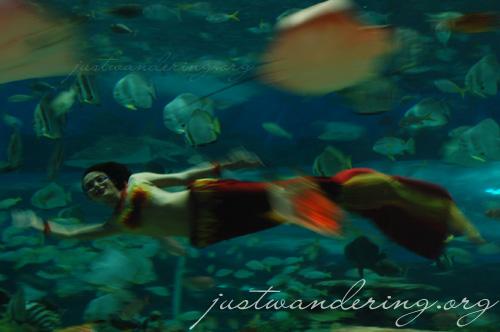 Manila Ocean Park Tour 46