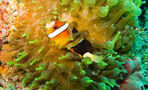 Flores Underwater 03