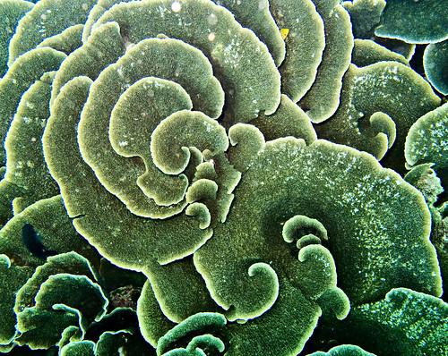 Flores Underwater 06