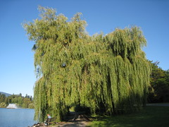 IMG_5889 (Prabhsharanbir) Tags: vancouver downtown stanleypark vpl
