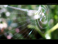 NA TEIA DA ARANHA- In The Net of Spider- FRONT PAGE (jonycunha) Tags: brazil net brasil spider explore frontpage aranha teia aracnideo h50 teiadearanha itapena jonycunha inthenetofspider