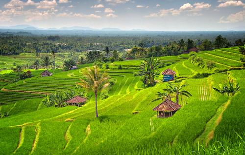 Bali 45