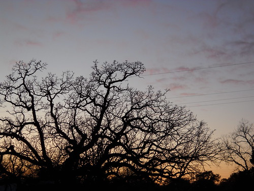 This tree grows across the street from my parents house. On Sunday, its large branches against the beautiful sunset struck me as something I had to document.