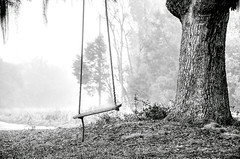 Coosaw - Tree Swing (Sco C. Hansen) Tags: fog landscape blackwhite oak nikon south low country scenic southern hansen treeswing lowcountry d300 beaufortcounty stockphotoagency beaufortphotographer hiltonheadphotographer wwwlowcountryphotographynet photostockagency