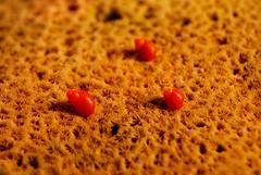Caramujos vermelhos (Caio tm) Tags: praia coral vermelhos caramujos