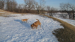 IMG_2635 Atop the World As They Know It (Sally Van Natta) Tags: winter snow dogs nelsonpark homermarge lakedecatur sallyvannatta february2010