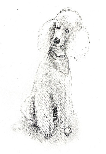 Another Poodle