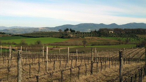 vineyard_085