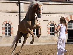 Emeline Hussenet et Pyrame (Larch) Tags: horse france cheval 71 bourgogne cluny haras saoneetloire spectacleéquestre expressyourselfaward planètecheval emelinehussenetetpyrame emelinehussenet lesjeudisdecluny