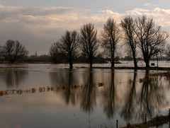 On a row (Elly Snel) Tags: trees holland reflection water clouds river bomen flood wolken dieren ijssel gelderland weerspiegeling rivier hoogwater 15challengeswinner beginnerdigitalphotographychallengewinner beautifulworldchallenges