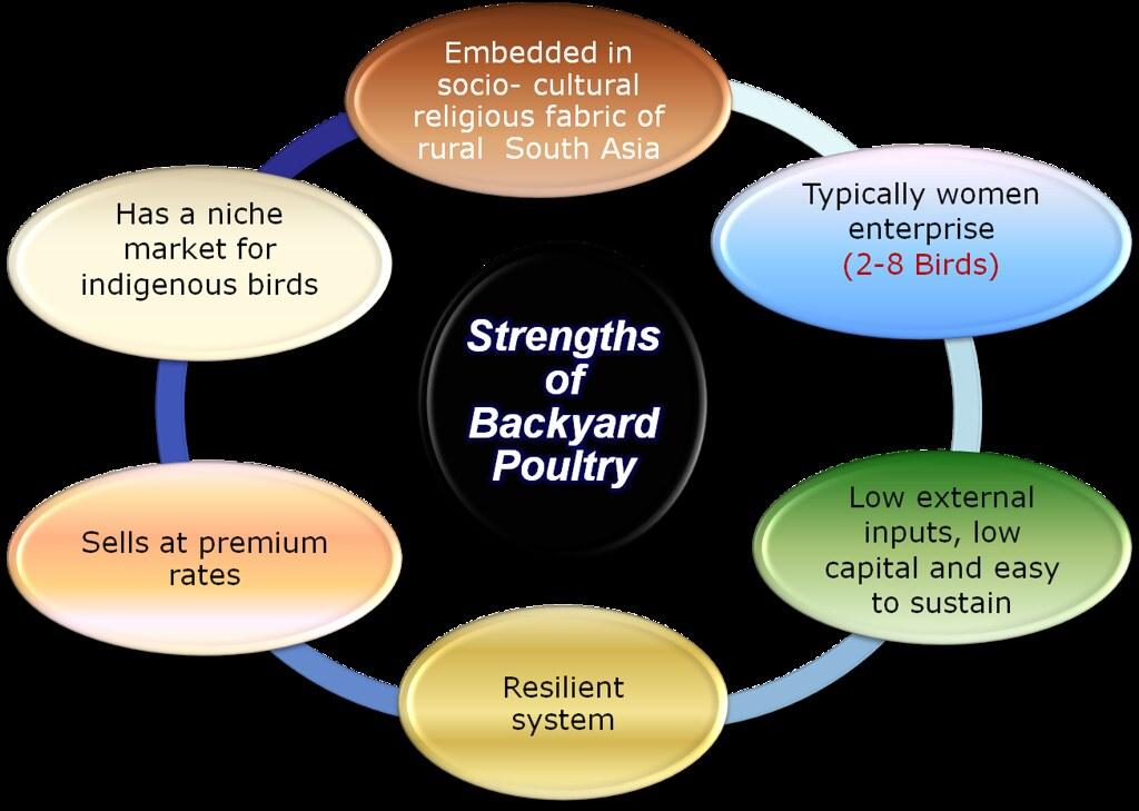 poultry artikel powerpoint 2