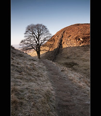 Sycamore Gap (Shutter Yeti) Tags: trees landscape canoneos20d northumberland northeast hadrianswall craglough andychiu tamron1750mmf28 cokingnd4grad