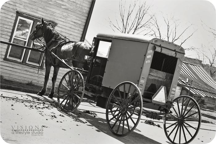 Horse BW WM2