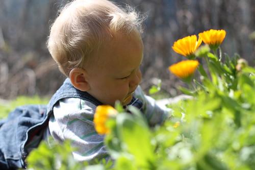 Little gardener 1