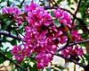 Spring's Coming! (sam_alcaphone) Tags: flower spring bahar چمن بهارگل