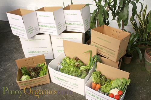 OrganicManila - 3 boxes