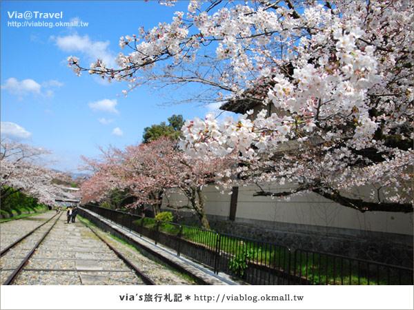 【via京都賞櫻行】鐵道上的櫻花美景~蹴上鐵道4