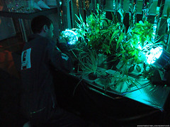 Jameson Cult Film Club Presents Moon - Sam Bell tends his plants while Sam Bell watches