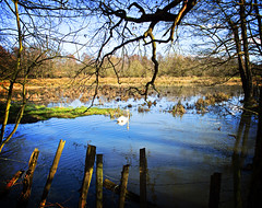 Wensum Flood Plain, Lomo Style (David S Wilson) Tags: england spring norfolk fauxlomo 2010 lyng canong10 wensumfloodplain