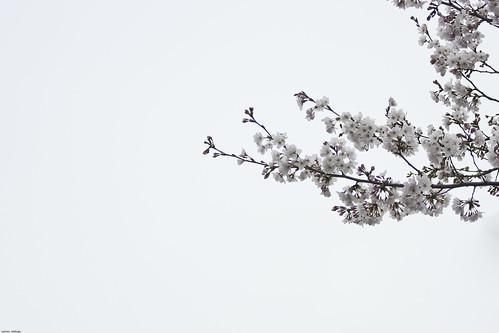 9987 - Sakura2010 #6
