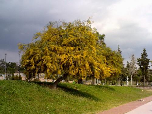 mimoza-atatürk parkı-mersin