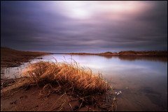 Tentsmuir Sands (angus clyne) Tags: life wild sky storm beach nature grass scotland pond sand fife reserve bruised tentsmuir maram tentsmuirsands
