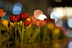 Spring Night (春天的夜晚)
