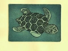 морская черепаха-синий 001 (tim.spb) Tags: original etching heart turtle postcard small snail crab valentine ornament owl plates proverbs desigh ãðàôèêà открытки графика малые fibonachi aquafortis формы офорт îòêðûòêè ìàëûåïîëèãðàôè÷åñêèåôîðìû îôîðò ìîðñêàÿ÷åðåïàõàñèíèé печатные