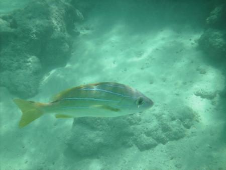 snorkeling10