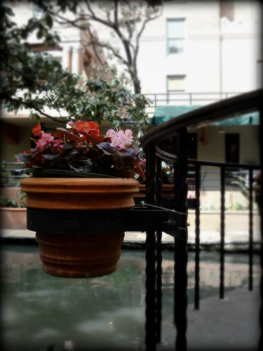 Flower pot SA Riverwalk