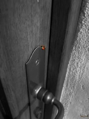 Watch over my house (fay.tor) Tags: door house france de handle algeria critter ladybug porte maison algérie coccinelle bestiole poignet palaiseau noirblanccouleur