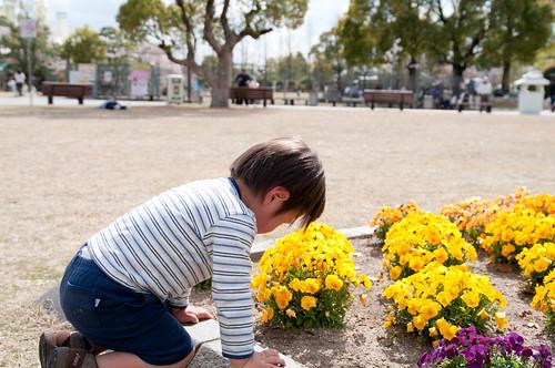 花を愛でる息子