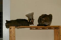 bookcasecats