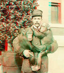 Zoo Keeper anaglyph3D (depthandtime) Tags: park old newyork vintage found zoo stereoscopic stereophotography 3d uniform view chimp antique anaglyph stereo card views zookeeper stereoview occupational chimpanzee stereograph foundphoto chimps anaglyphic stereographic zoological turnofthecentury redcyan stereocard unmounted underwoodunderwood