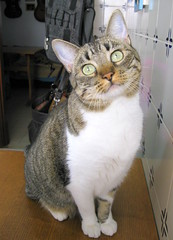 243-November'09 (Silvia Inacio) Tags: cats cat tabby gatos gata princesa cc100 kissablekat