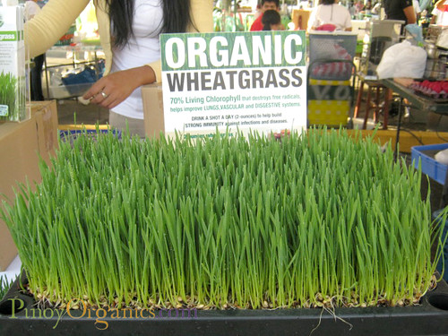AAV Market-organic wheatgrass