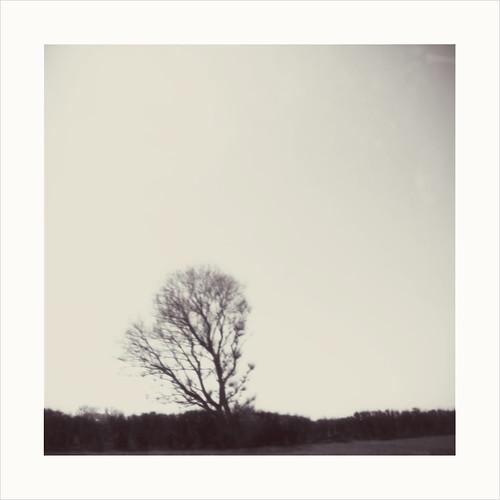 tree 'roid