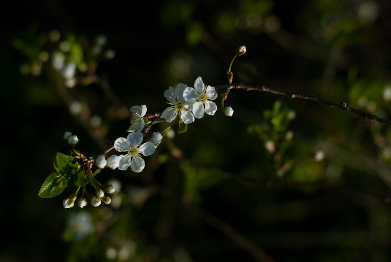 Spring in Alexeevka #8