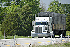 White Pete pulling a flatbed (myhotrod9) Tags: truck semi pete conventional trucking peterbilt 18wheeler flatbed tractortrailer bigrig class8 largecar