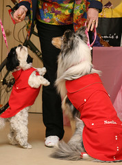 Sid Reaburn, of Hensall, keeps the treats coming for the canine models at the fashion show. Niki (left) and Noelle (right) were very stylish in their clothing available at Woof N' Stuff, a store new to Main Street this seaon. Reaburn is modelling clothing from The Wardrobe Bizaar.