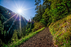 Eagle Creek Sunburst (Cool HDR (Chris Pokorny)) Tags: flowers wild sun oregon creek portland day eagle path hike falls trail flare sunburst pdx gorge hdr hdri punchbowl