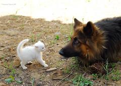 ne hai avuto abbastanza vero??? (vincenzovacca) Tags: pet cane cat friend dod amicizia animali gattino laky caneegatto animalidomestici friendschip