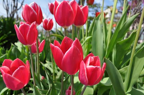 flower2010.5.17-1