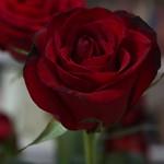 Mr. Woodcourt's flowers [138/365] thumbnail