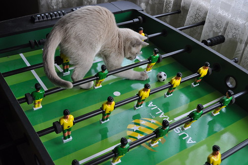 Foosball Kitty 3055