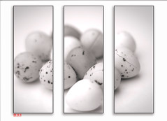 Eggs triptych | Explored (.:shk:.) Tags: monochrome photoshop triptych chocolate border crack frame eggs shk canoneos500d shkarim sogirkarim