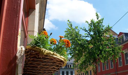 Auf Wunsch eines einzelnen Herren mal ein Blumenbild im Neustadtgeflüster.