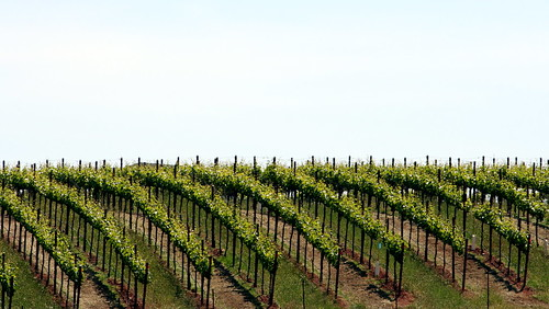 Arista Vineyard, Russian River